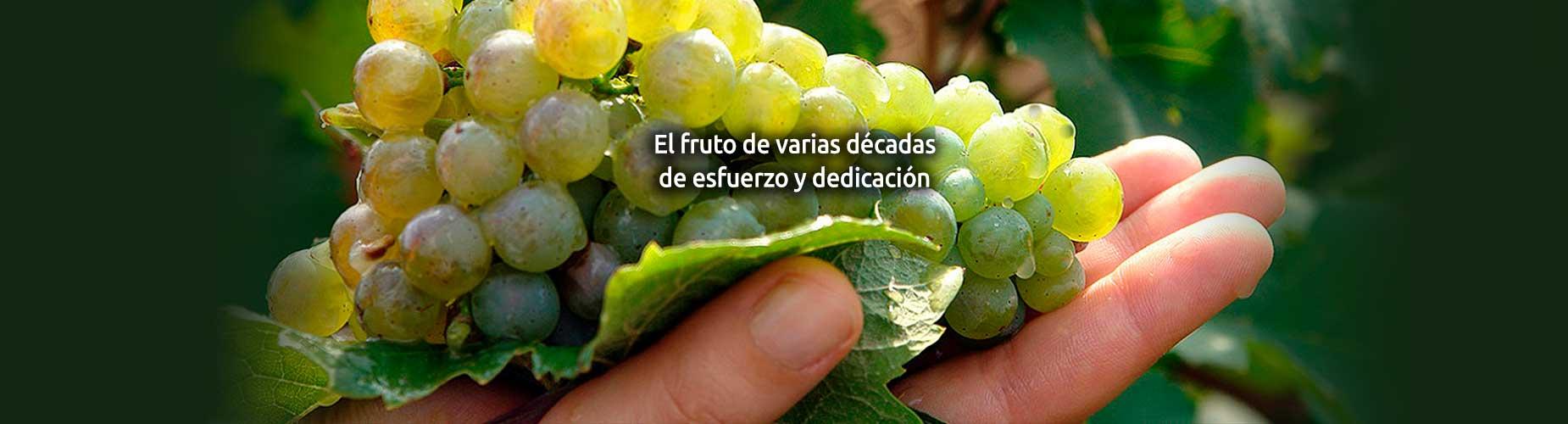 cooperativa Cozar de la Sierra uvas