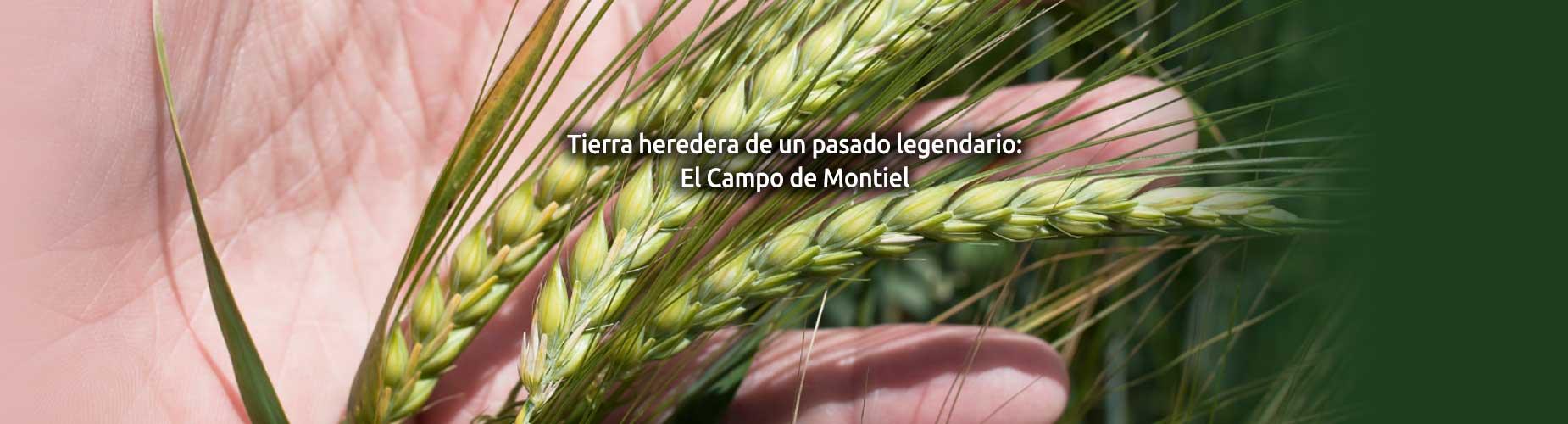 cooperativa Cozar de la Sierra cereales